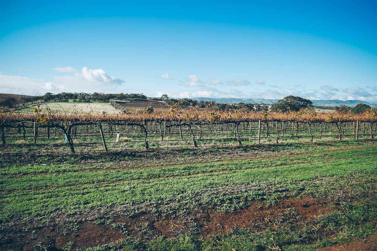 0513_Barossa-Valley_110